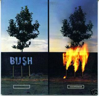 Bush - Swallowed